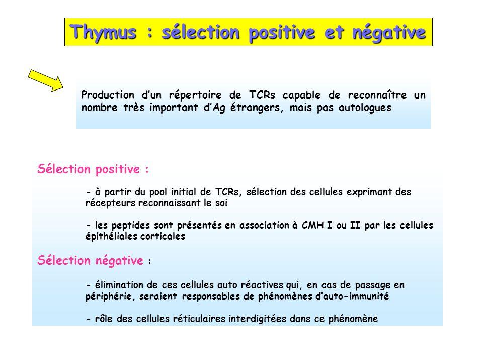 Thymus : sélection positive et négative Sélection positive : - à partir du pool initial de TCRs, sélection des cellules exprimant des récepteurs recon
