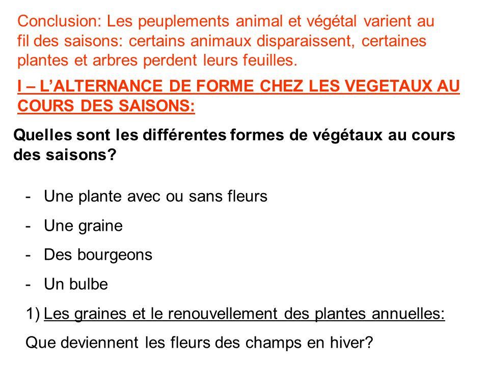 Conclusion: Les peuplements animal et végétal varient au fil des saisons: certains animaux disparaissent, certaines plantes et arbres perdent leurs fe