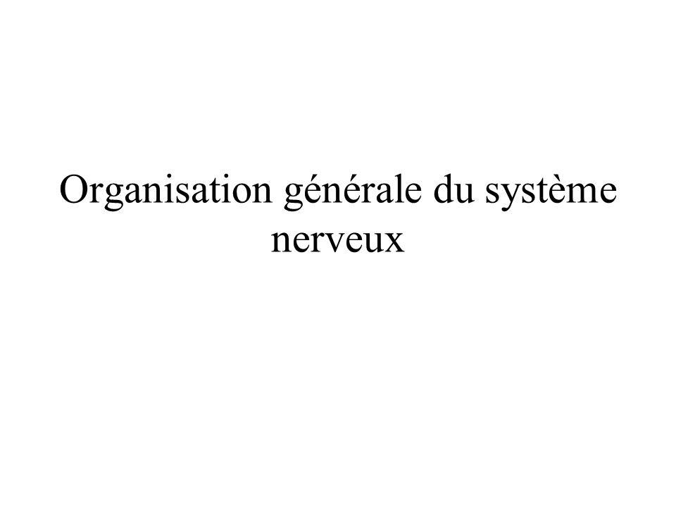 Les grandes fonctions du système nerveux Système nerveux = Unité de traitement de l information.