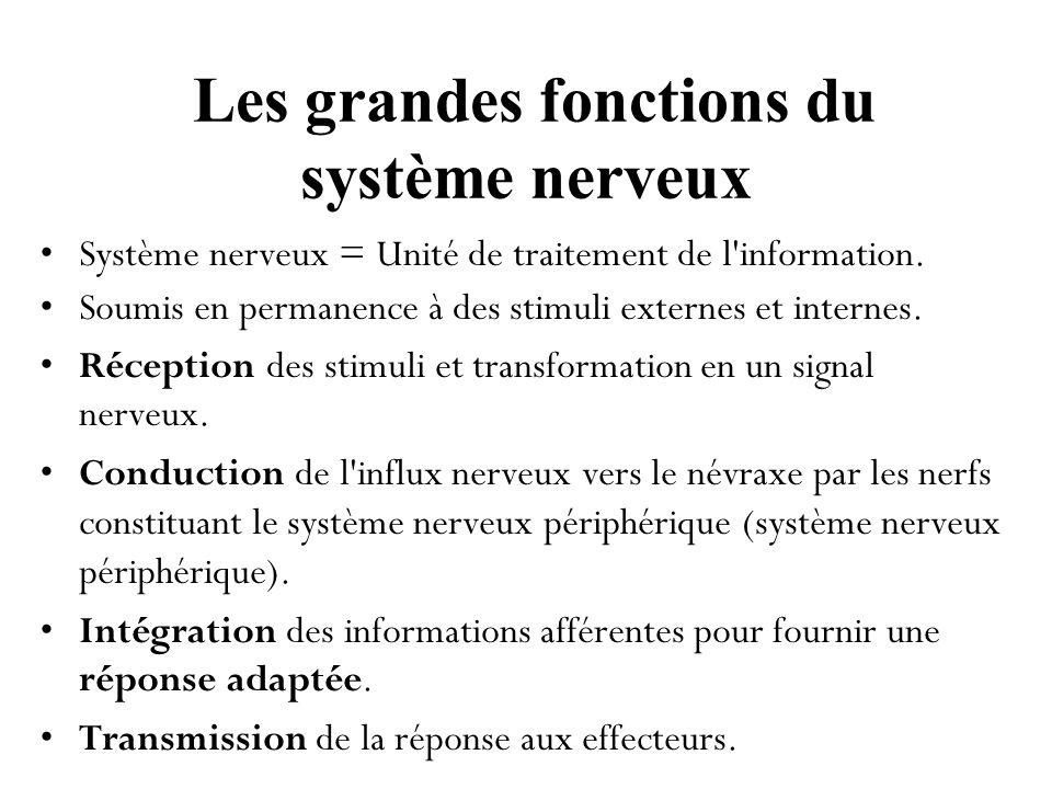 Le système nerveux central Bien que le traitement de l information commence dès le récepteur, les grandes fonctions nerveuses sont réalisées par le système nerveux central.