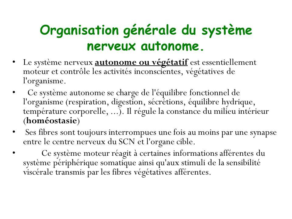 Organisation générale du système nerveux autonome. Le système nerveux autonome ou végétatif est essentiellement moteur et contrôle les activités incon