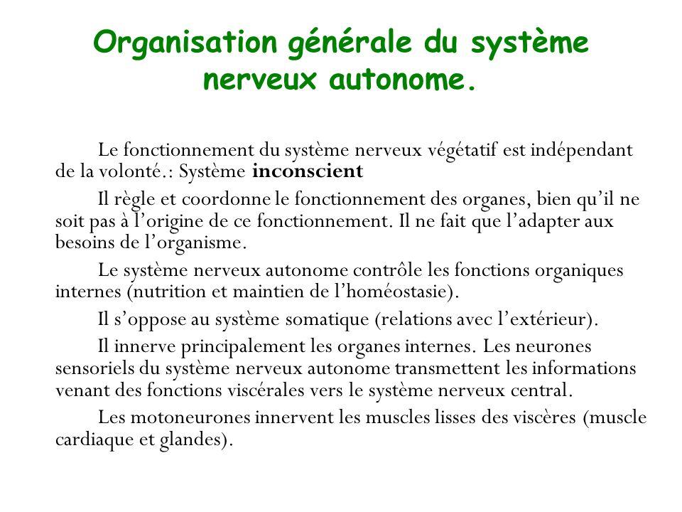 Organisation générale du système nerveux autonome. Le fonctionnement du système nerveux végétatif est indépendant de la volonté.: Système inconscient