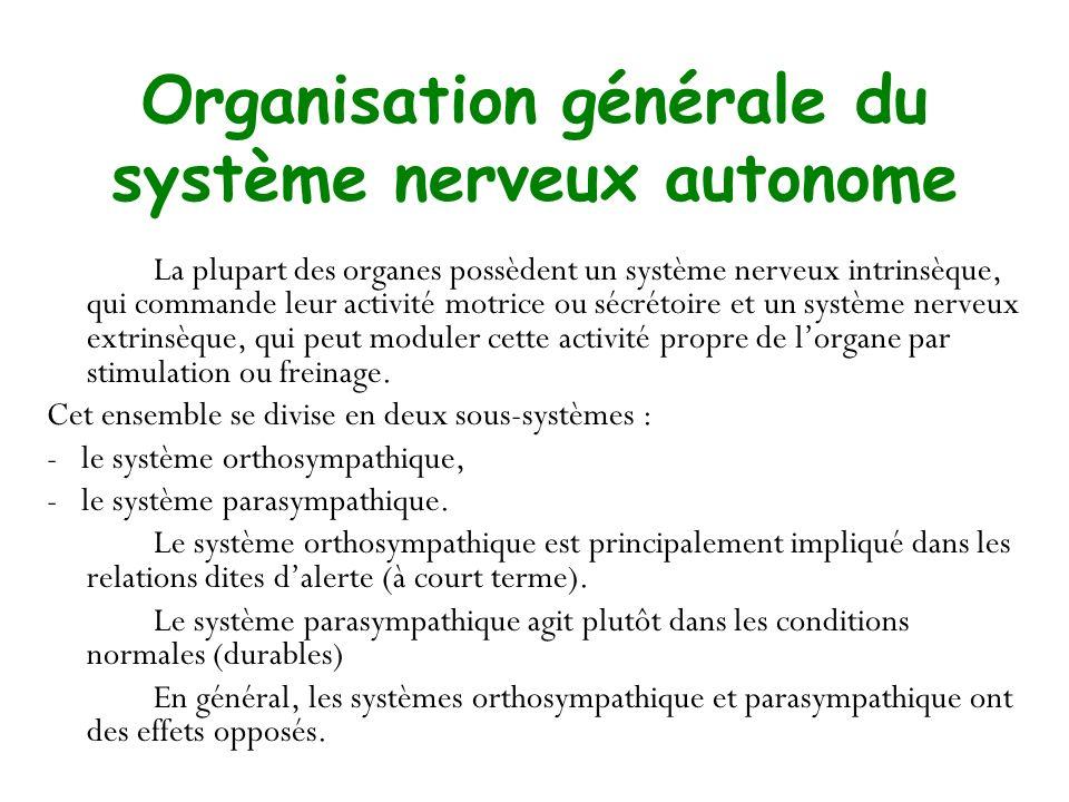 Organisation générale du système nerveux autonome La plupart des organes possèdent un système nerveux intrinsèque, qui commande leur activité motrice