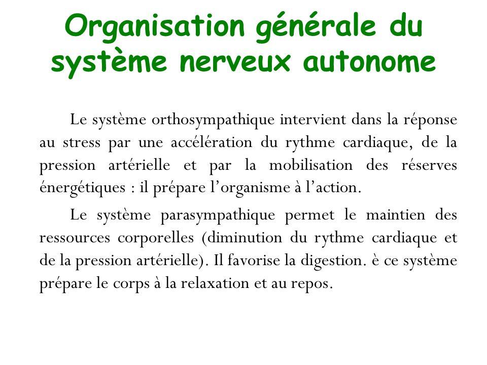 Organisation générale du système nerveux autonome Le système orthosympathique intervient dans la réponse au stress par une accélération du rythme card
