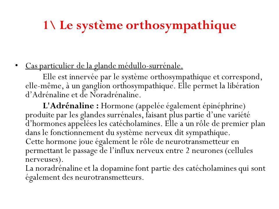 Cas particulier de la glande médullo-surrénale. Elle est innervée par le système orthosympathique et correspond, elle-même, à un ganglion orthosympath