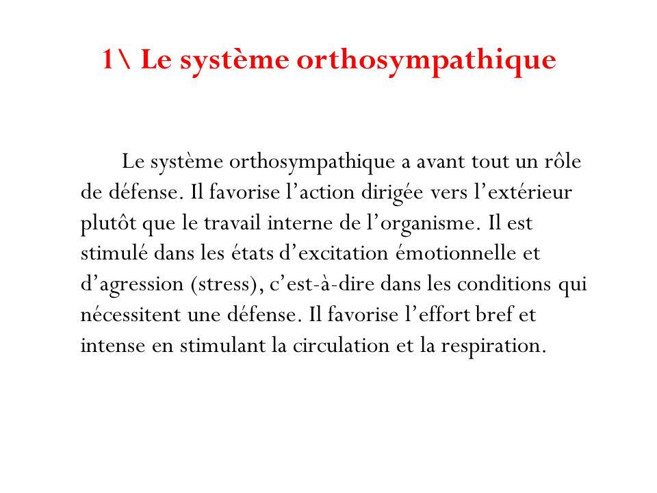 Le système orthosympathique a avant tout un rôle de défense. Il favorise laction dirigée vers lextérieur plutôt que le travail interne de lorganisme.