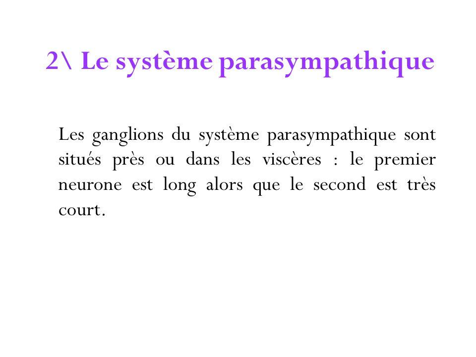 2\ Le système parasympathique Les ganglions du système parasympathique sont situés près ou dans les viscères : le premier neurone est long alors que l
