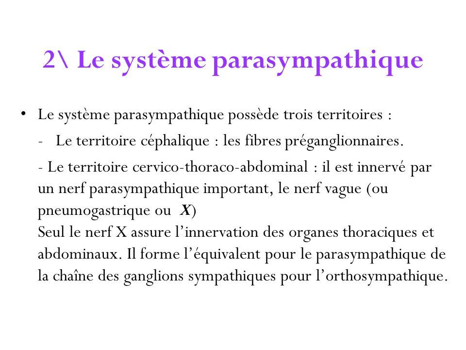 2\ Le système parasympathique Le système parasympathique possède trois territoires : - Le territoire céphalique : les fibres préganglionnaires. - Le t