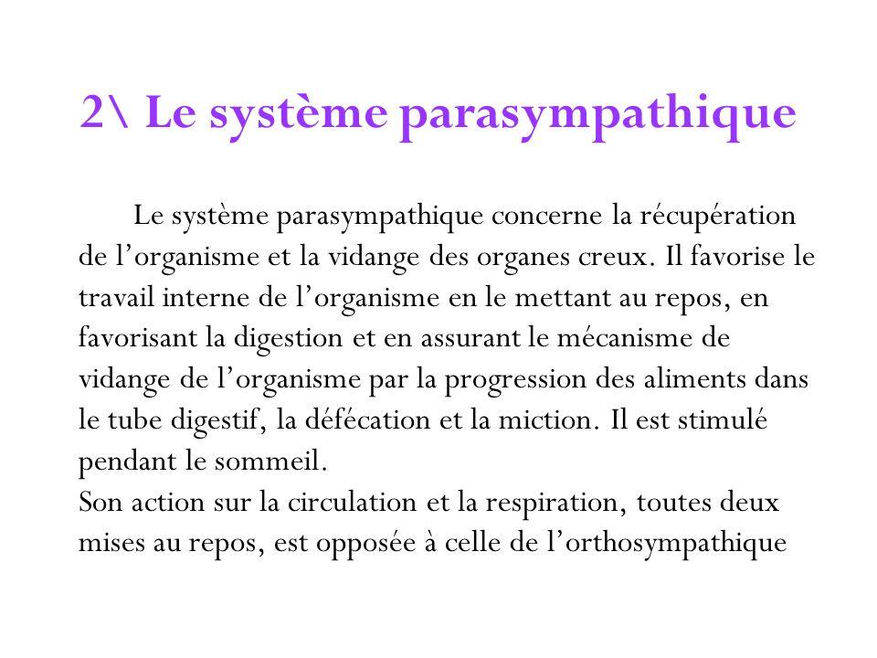 2\ Le système parasympathique Le système parasympathique concerne la récupération de lorganisme et la vidange des organes creux. Il favorise le travai