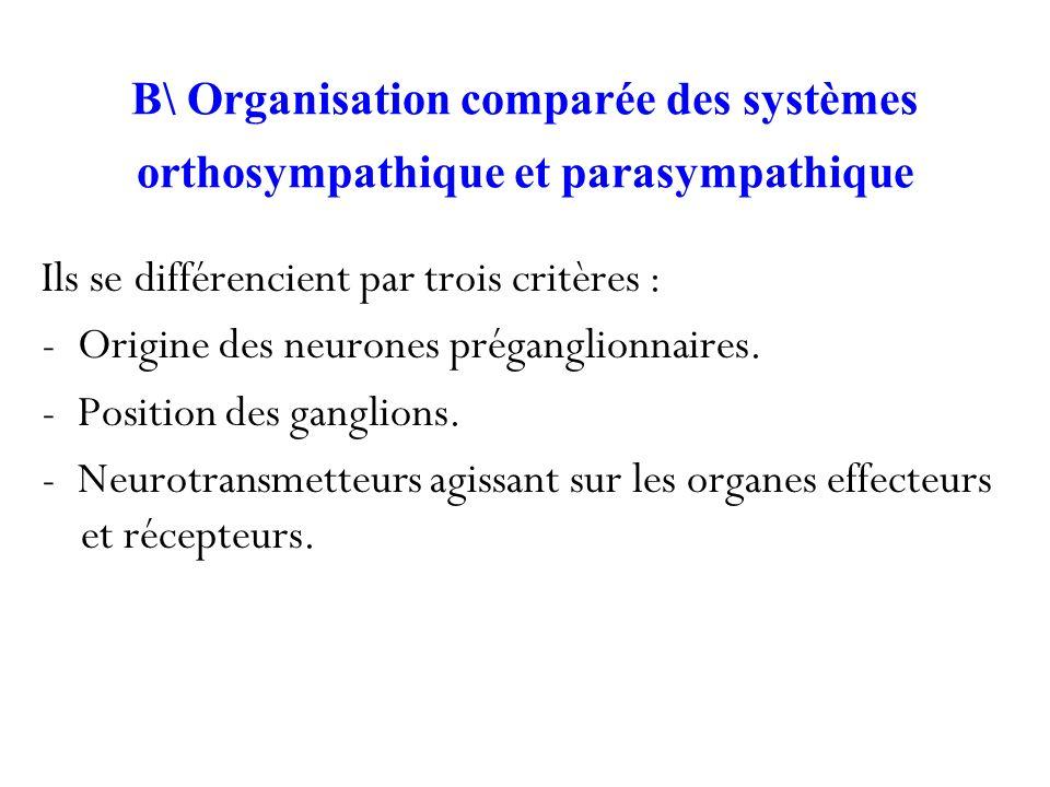 B\ Organisation comparée des systèmes orthosympathique et parasympathique Ils se différencient par trois critères : - Origine des neurones préganglion