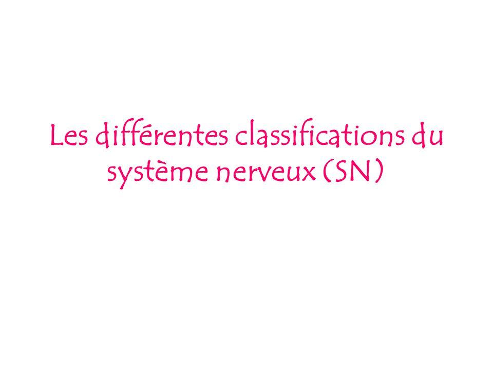 Deux degrés de classification existent : Classification fonctionnelle: SN Somatique (qui concerne lensemble du corps par lintermédiaire de lappareil locomoteur) SN Autonome ou végétatif (organes internes) Classification anatomique SN Central (protection osseuse) SN Périphérique (disséminé dans tout le corps, en relation avec le SN central)
