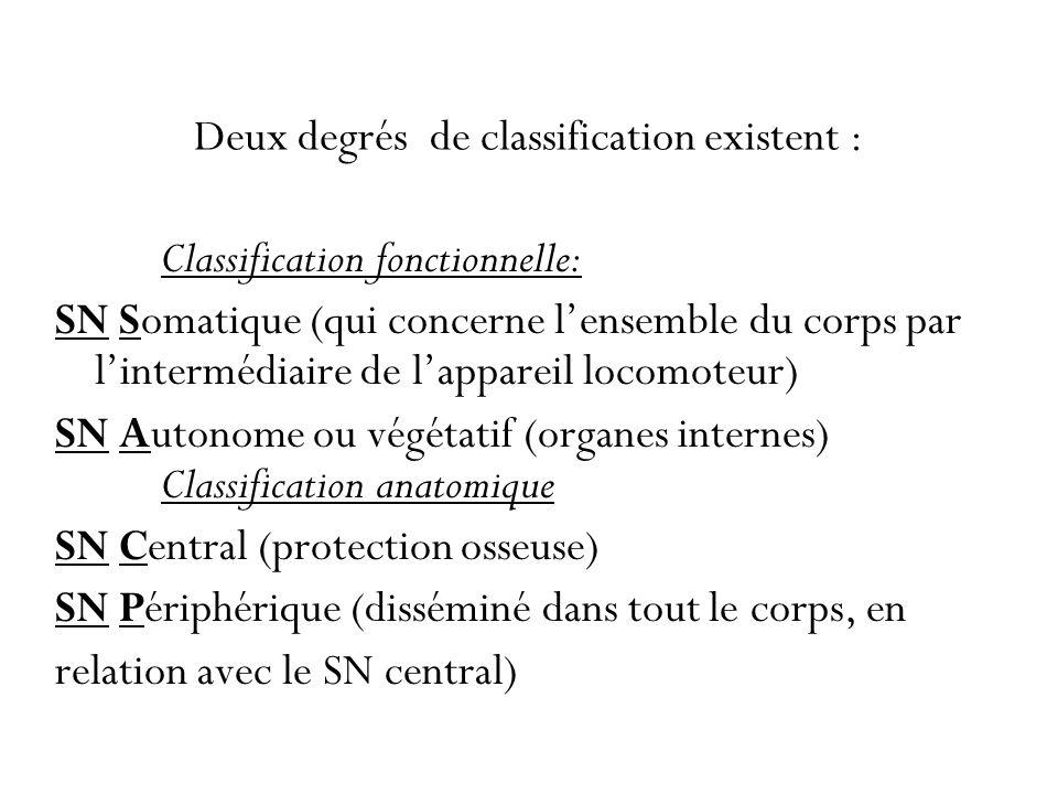 Deux degrés de classification existent : Classification fonctionnelle: SN Somatique (qui concerne lensemble du corps par lintermédiaire de lappareil l