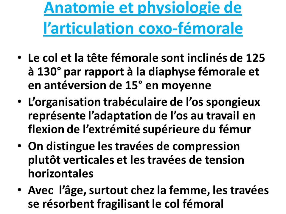 Anatomie et physiologie de larticulation coxo-fémorale Le col et la tête fémorale sont inclinés de 125 à 130° par rapport à la diaphyse fémorale et en