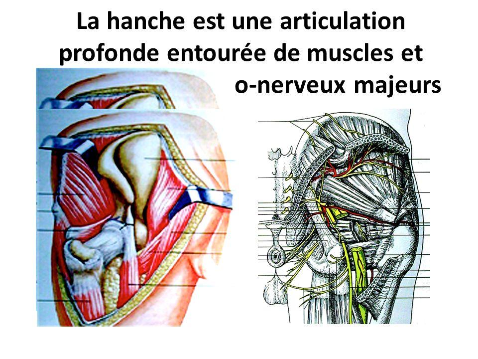 La hanche est une articulation profonde entourée de muscles et déléments vasculo-nerveux majeurs Voies dabord Antéro-externe Postéro-externe pour les prothèses Externes pour les synthèses