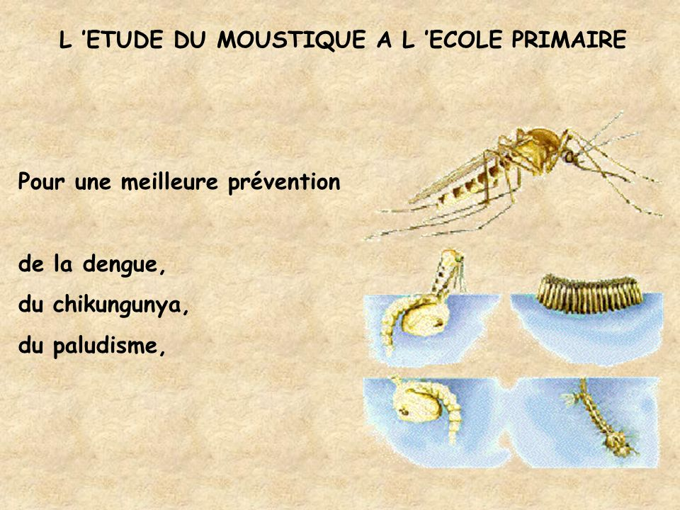 La place du moustique dans le programme - Cycle 1 DÉCOUVRIR LE MONDE DU VIVANT * Observations de caractéristiques du vivant * Découverte de différents milieux, sensibilité aux problèmes de l environnement * Découverte du corps, hygiène et santé