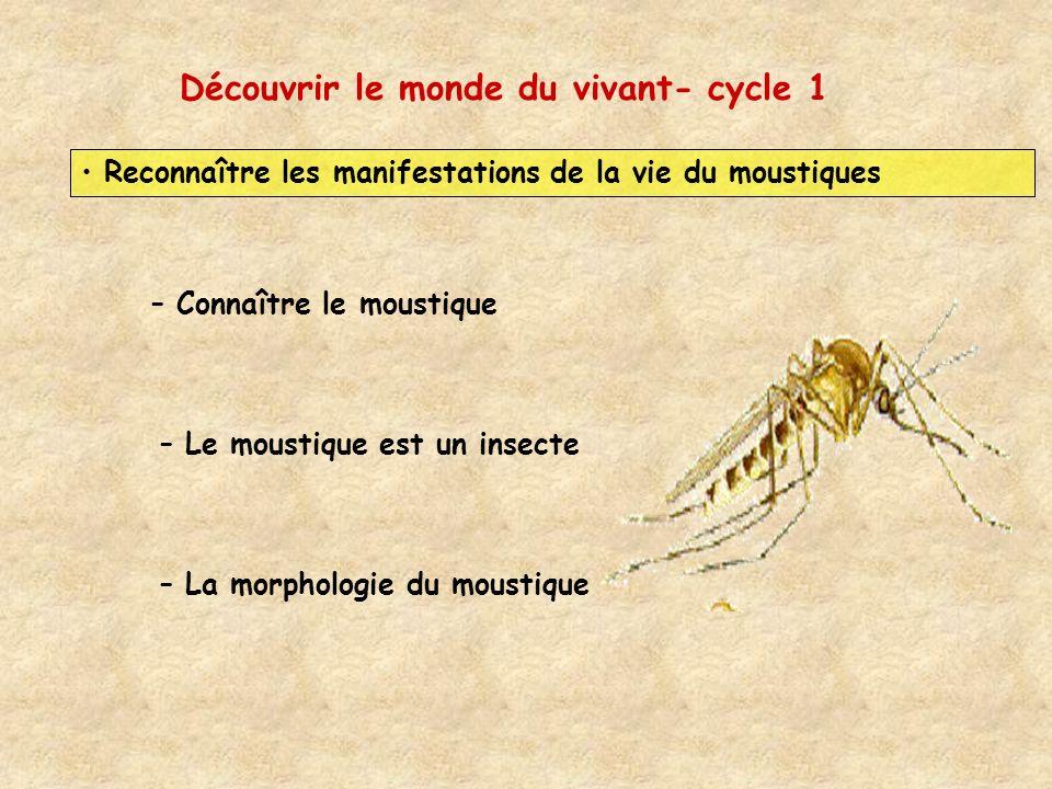 Découvrir le monde du vivant- cycle 1 Reconnaître les manifestations de la vie du moustiques – Connaître le moustique – Le moustique est un insecte –