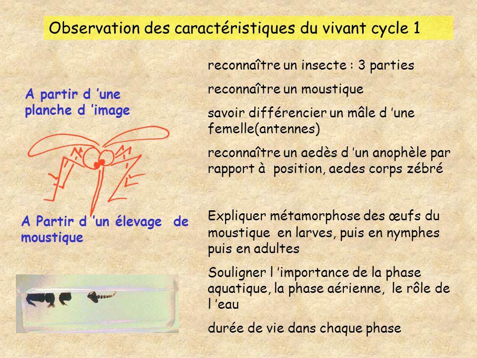 Observation des caractéristiques du vivant cycle 1 A partir d une planche d image reconnaître un insecte : 3 parties reconnaître un moustique savoir d