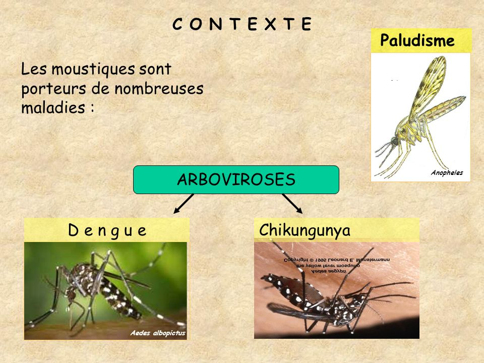 C O N T E X T E Les moustiques sont porteurs de nombreuses maladies : Anopheles Aedes albopictus ARBOVIROSES Paludisme D e n g u eChikungunya