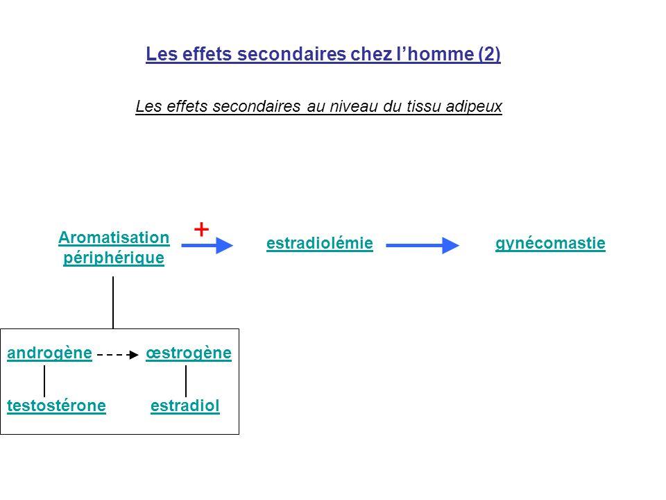 Les effets secondaires chez lhomme (2) Les effets secondaires au niveau du tissu adipeux Aromatisation périphérique androgèneœstrogène estradiol estra