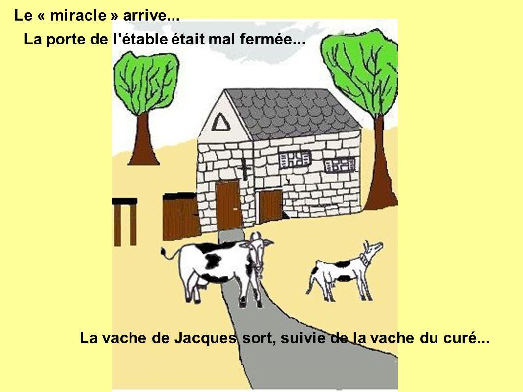 Le « miracle » arrive... La porte de l'étable était mal fermée... La vache de Jacques sort, suivie de la vache du curé...