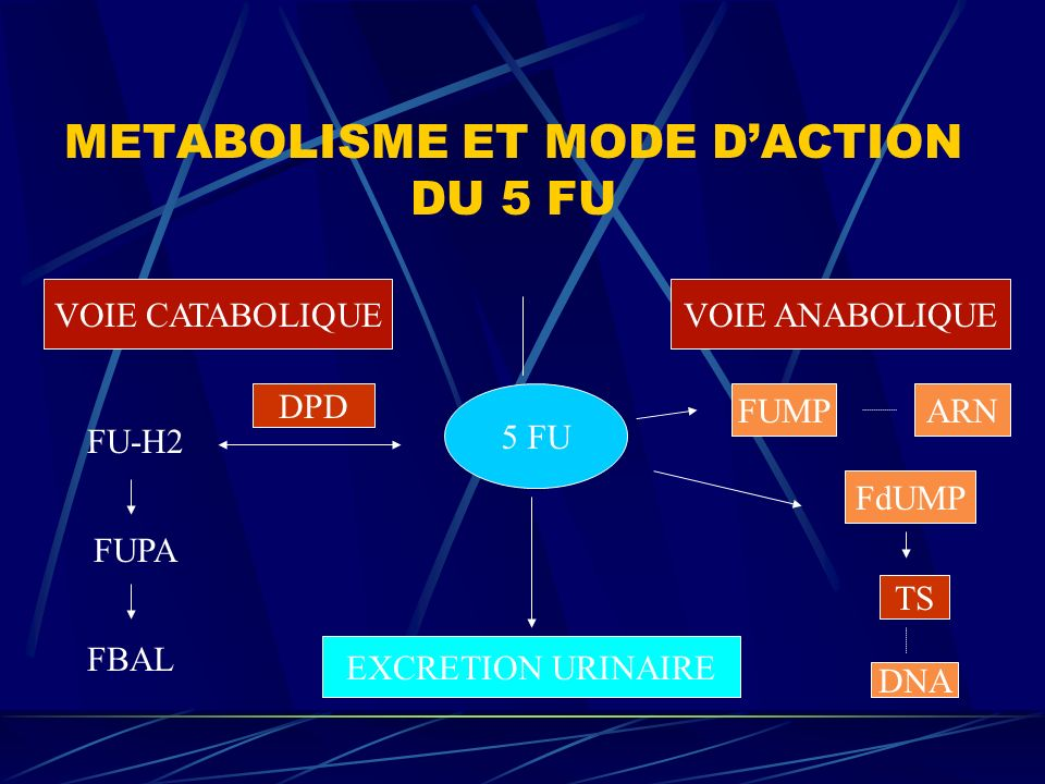 METABOLISME ET MODE DACTION DU 5 FU VOIE CATABOLIQUEVOIE ANABOLIQUE 5 FU EXCRETION URINAIRE DPD FU-H2 FUPA FBAL FUMPARN FdUMP TS DNA