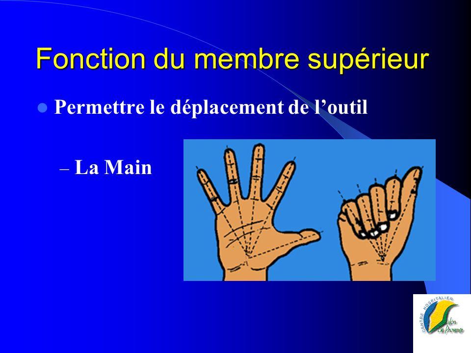 Fonction du membre supérieur Permettre le déplacement de loutil – La Main