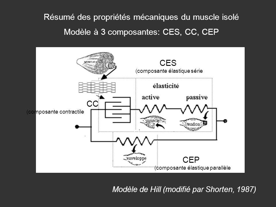Résumé des propriétés mécaniques du muscle isolé Modèle à 3 composantes: CES, CC, CEP Modèle de Hill (modifié par Shorten, 1987) CC (composante contra