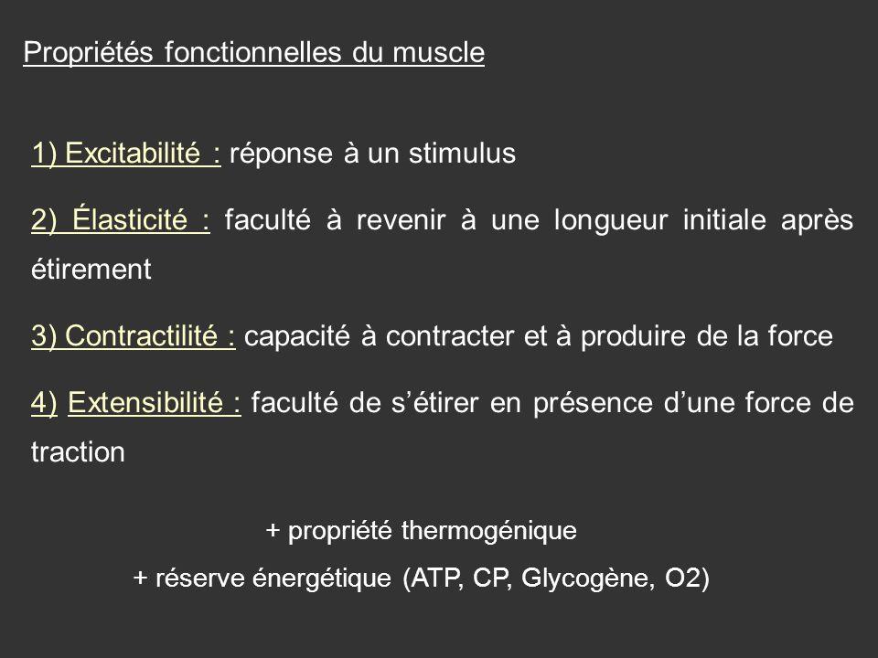 Propriétés fonctionnelles du muscle 1) Excitabilité : réponse à un stimulus 2) Élasticité : faculté à revenir à une longueur initiale après étirement