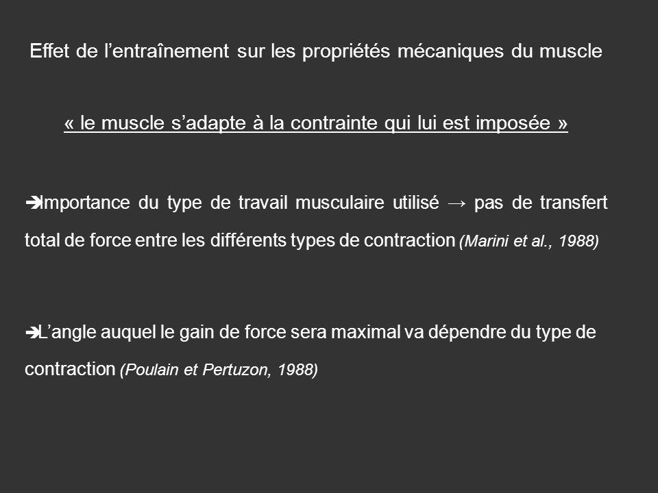 Effet de lentraînement sur les propriétés mécaniques du muscle « le muscle sadapte à la contrainte qui lui est imposée » Importance du type de travail