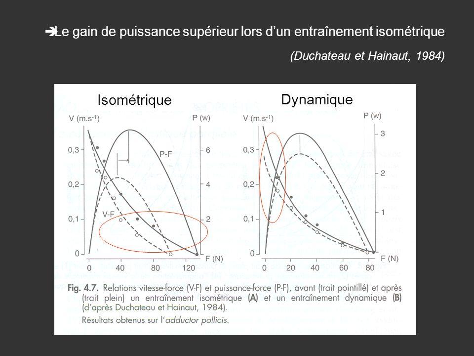 Le gain de puissance supérieur lors dun entraînement isométrique (Duchateau et Hainaut, 1984) Isométrique Dynamique