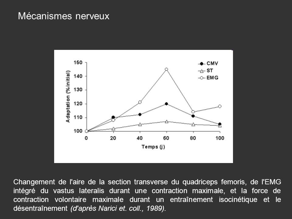 Changement de l aire de la section transverse du quadriceps femoris, de l EMG intégré du vastus lateralis durant une contraction maximale, et la force de contraction volontaire maximale durant un entraînement isocinétique et le désentraînement (d après Narici et.