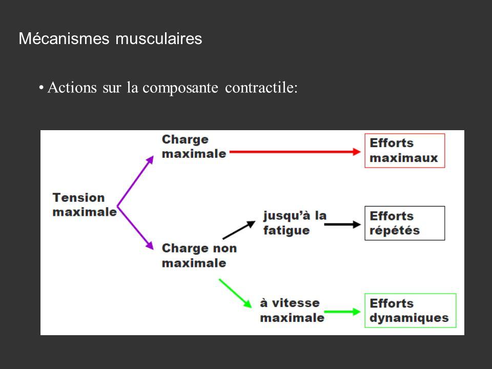 Actions sur la composante contractile: Mécanismes musculaires