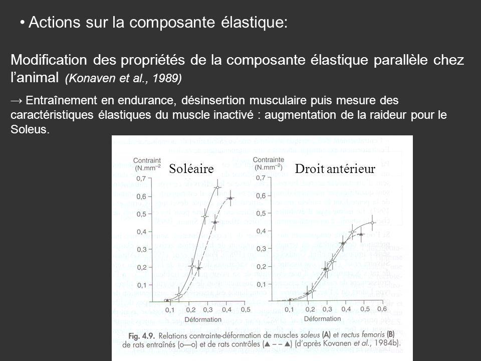 Actions sur la composante élastique: Modification des propriétés de la composante élastique parallèle chez lanimal (Konaven et al., 1989) Entraînement