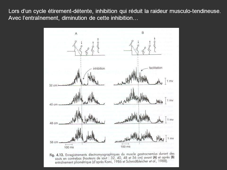 Lors dun cycle étirement-détente, inhibition qui réduit la raideur musculo-tendineuse. Avec lentraînement, diminution de cette inhibition…