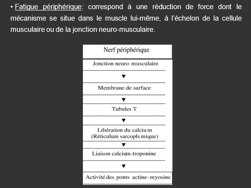 Fatigue périphérique: correspond à une réduction de force dont le mécanisme se situe dans le muscle lui-même, à léchelon de la cellule musculaire ou d