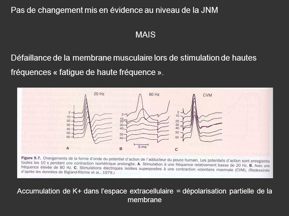 Pas de changement mis en évidence au niveau de la JNM MAIS Défaillance de la membrane musculaire lors de stimulation de hautes fréquences « fatigue de