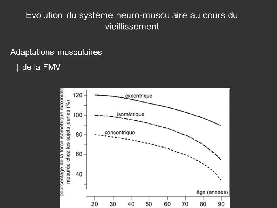 Évolution du système neuro-musculaire au cours du vieillissement Adaptations musculaires - de la FMV
