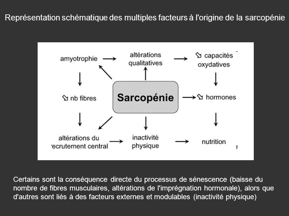 Certains sont la conséquence directe du processus de sénescence (baisse du nombre de fibres musculaires, altérations de l'imprégnation hormonale), alo