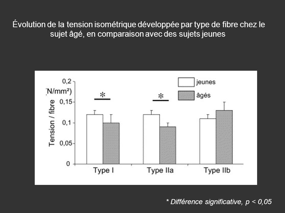 Évolution de la tension isométrique développée par type de fibre chez le sujet âgé, en comparaison avec des sujets jeunes * Différence significative,
