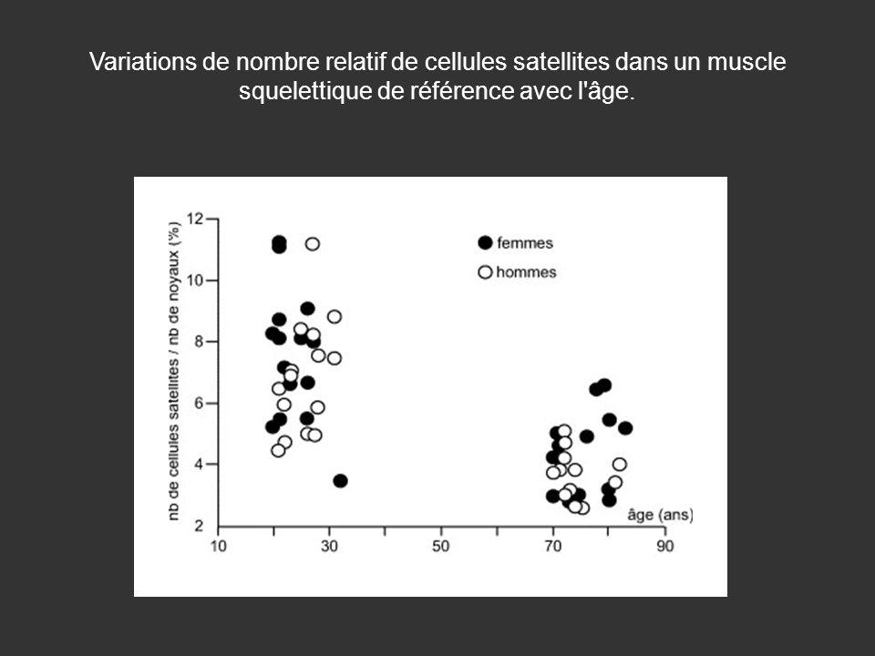 Variations de nombre relatif de cellules satellites dans un muscle squelettique de référence avec l'âge.