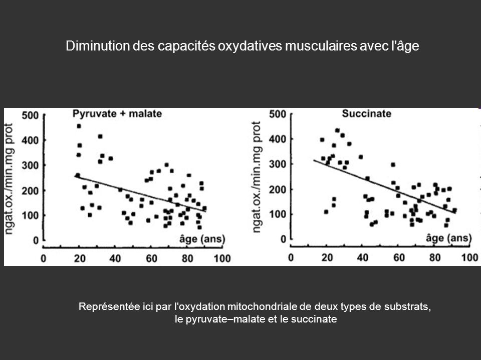 Diminution des capacités oxydatives musculaires avec l'âge Représentée ici par l'oxydation mitochondriale de deux types de substrats, le pyruvate–mala