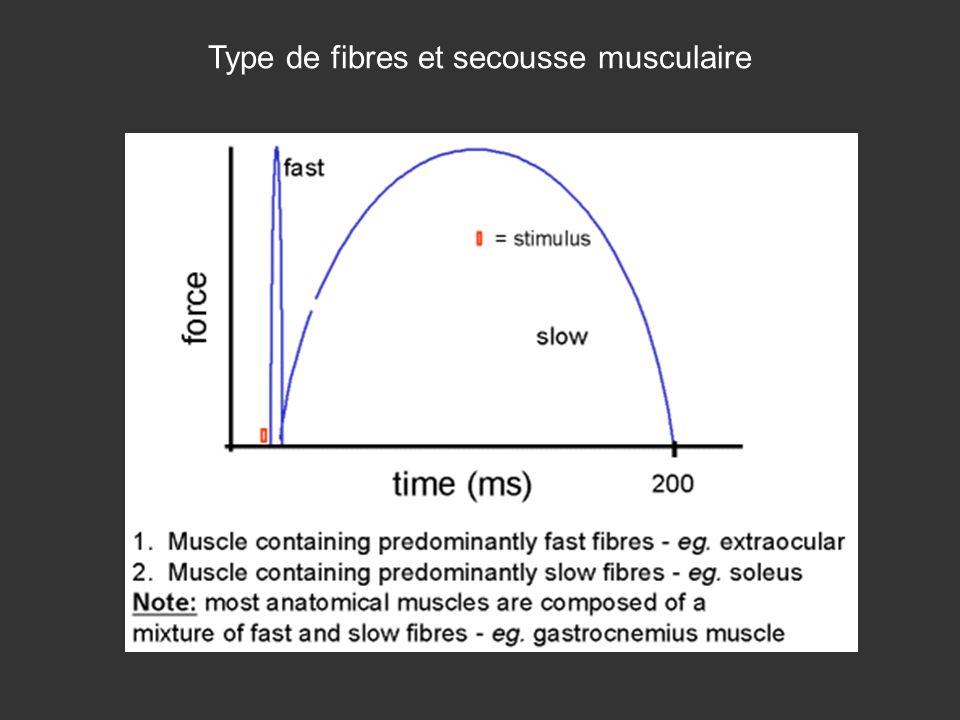 Type de fibres et secousse musculaire