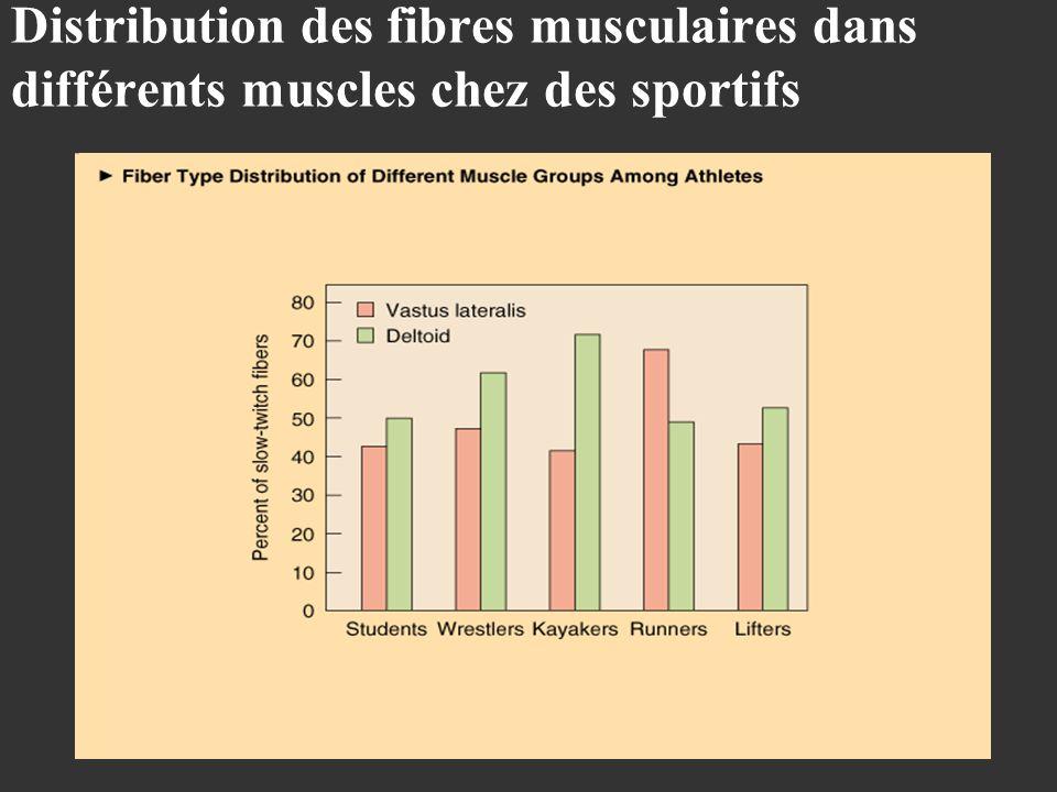 Distribution des fibres musculaires dans différents muscles chez des sportifs