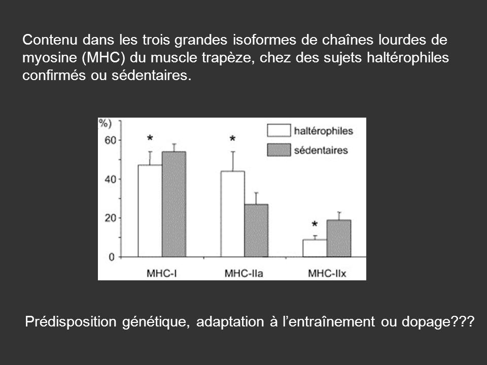 Contenu dans les trois grandes isoformes de chaînes lourdes de myosine (MHC) du muscle trapèze, chez des sujets haltérophiles confirmés ou sédentaires