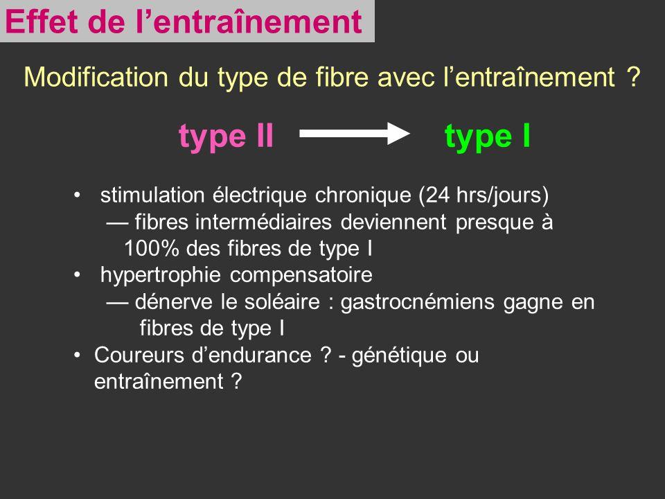 Modification du type de fibre avec lentraînement ? type IItype I stimulation électrique chronique (24 hrs/jours) fibres intermédiaires deviennent pres