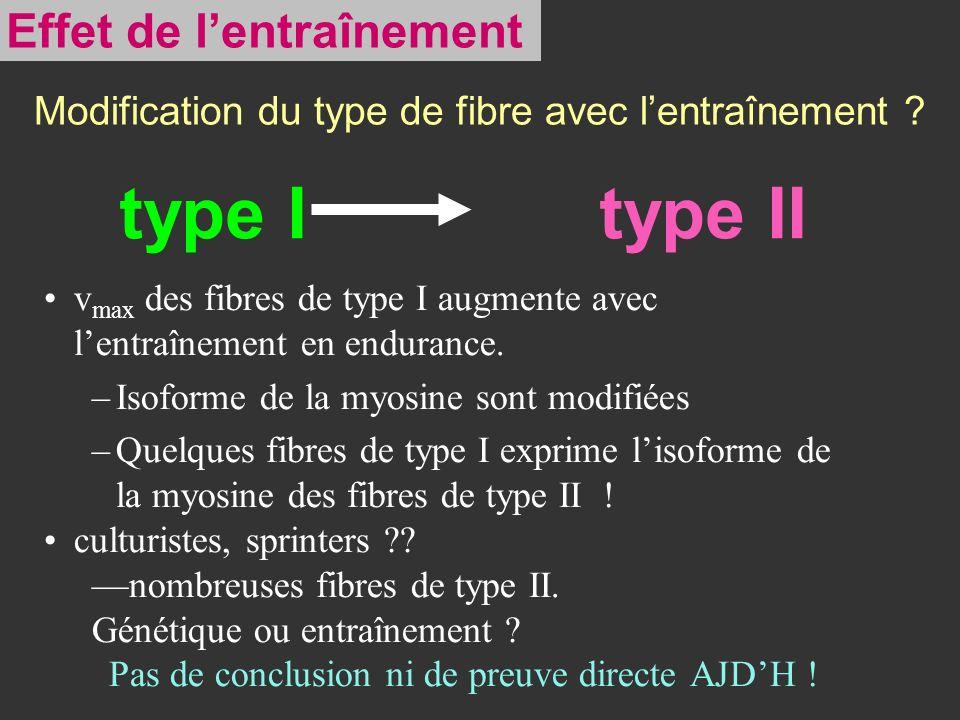 type I type II v max des fibres de type I augmente avec lentraînement en endurance. –Isoforme de la myosine sont modifiées –Quelques fibres de type I