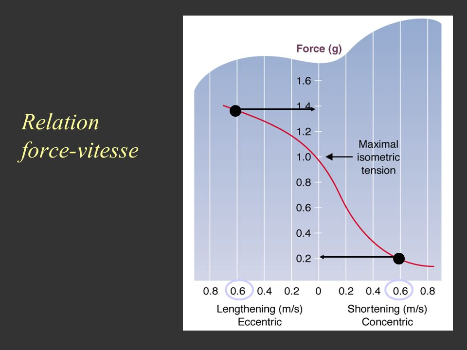 Relation force-vitesse
