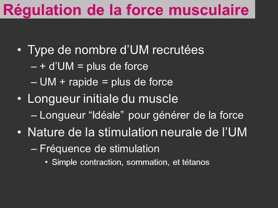 Type de nombre dUM recrutées –+ dUM = plus de force –UM + rapide = plus de force Longueur initiale du muscle –Longueur Idéale pour générer de la force