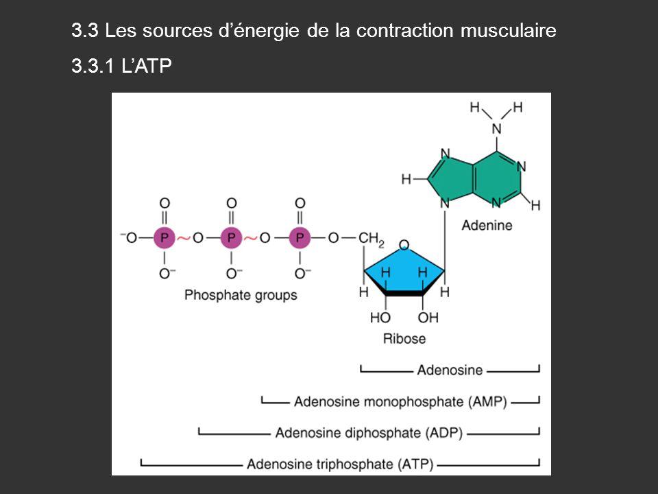 3.3 Les sources dénergie de la contraction musculaire 3.3.1 LATP