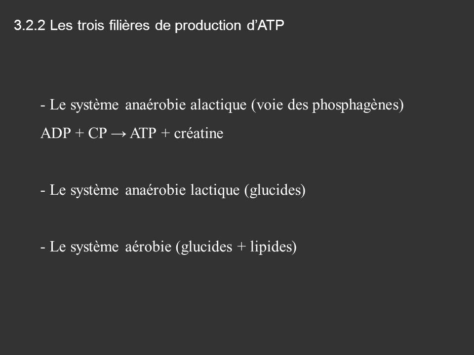 3.2.2 Les trois filières de production dATP - Le système anaérobie alactique (voie des phosphagènes) ADP + CP ATP + créatine - Le système anaérobie la